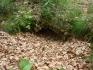 Leszczyn :: Leszczyn,cmentarz rodowy Manteuffel