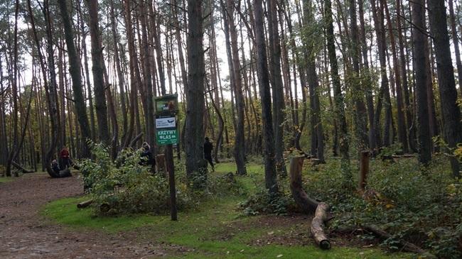 Oglądasz obraz z artykułu: Gryfino - Krzywy Las